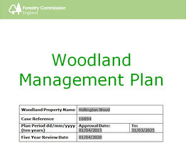 Hollington Wood Management Plan – Have your say