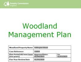 Hollington Wood Management Plan – Have your say