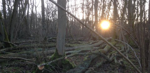 sunrise-in-the-woods