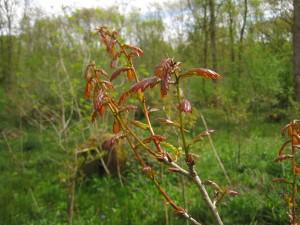 Copper leaves on oak
